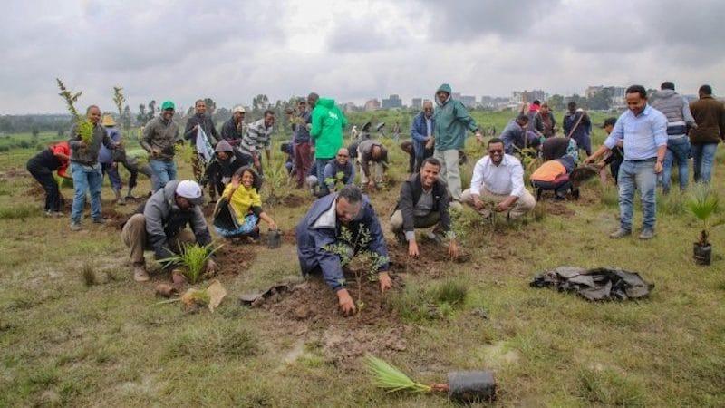 Cropped-reforestacion-etiopia