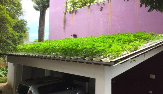 Ingeniero brasileño diseña la primera teja hidropónica del mundo