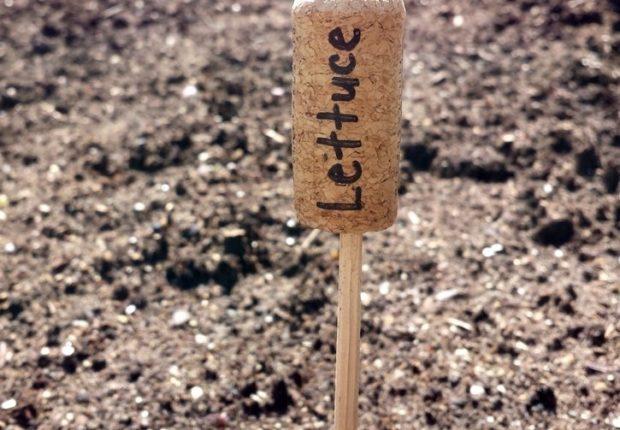Etiquetas para plantas con tapones de corcho