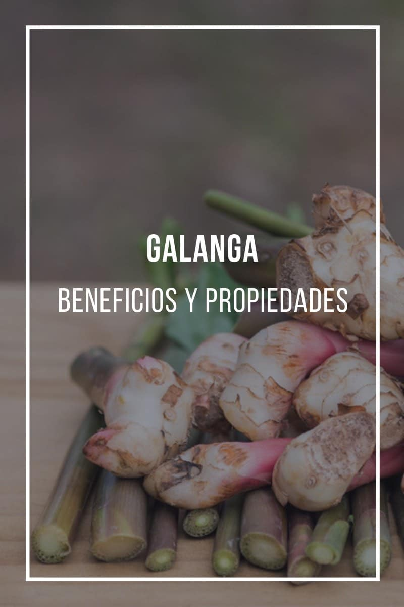 Galanga: Propiedades, beneficios y usos