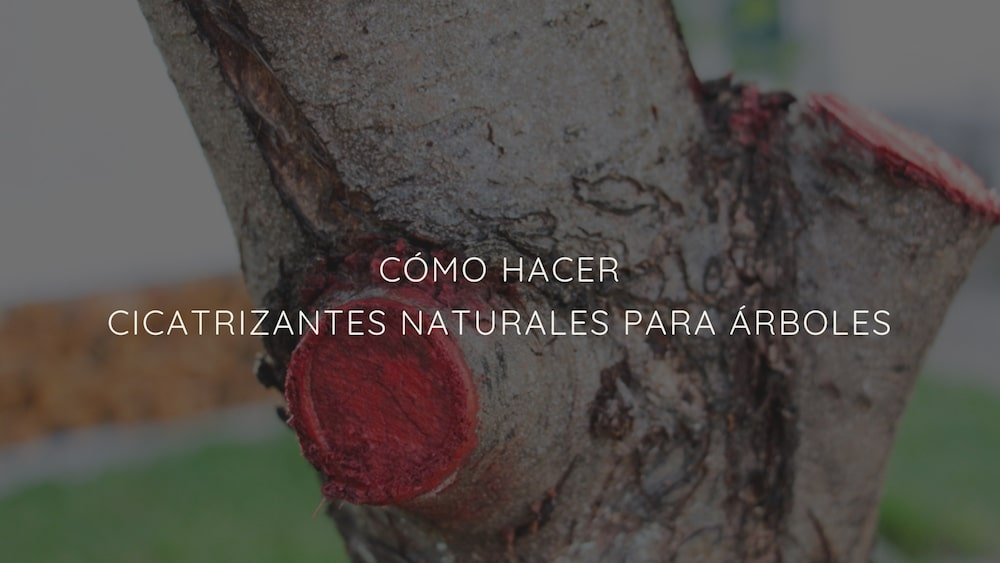 Cicatrizantes-naturales-para-árboles
