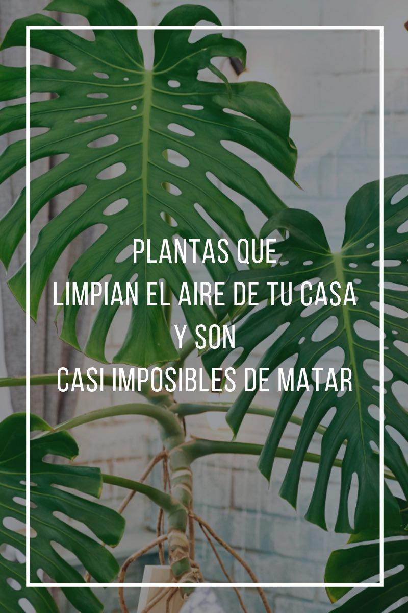 plantas que limpian el aire de tu casa y son casi imposibles de matar