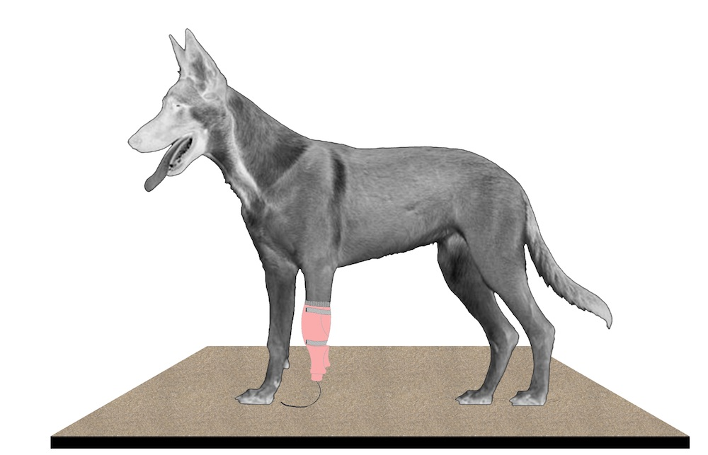 Protesis-canina1