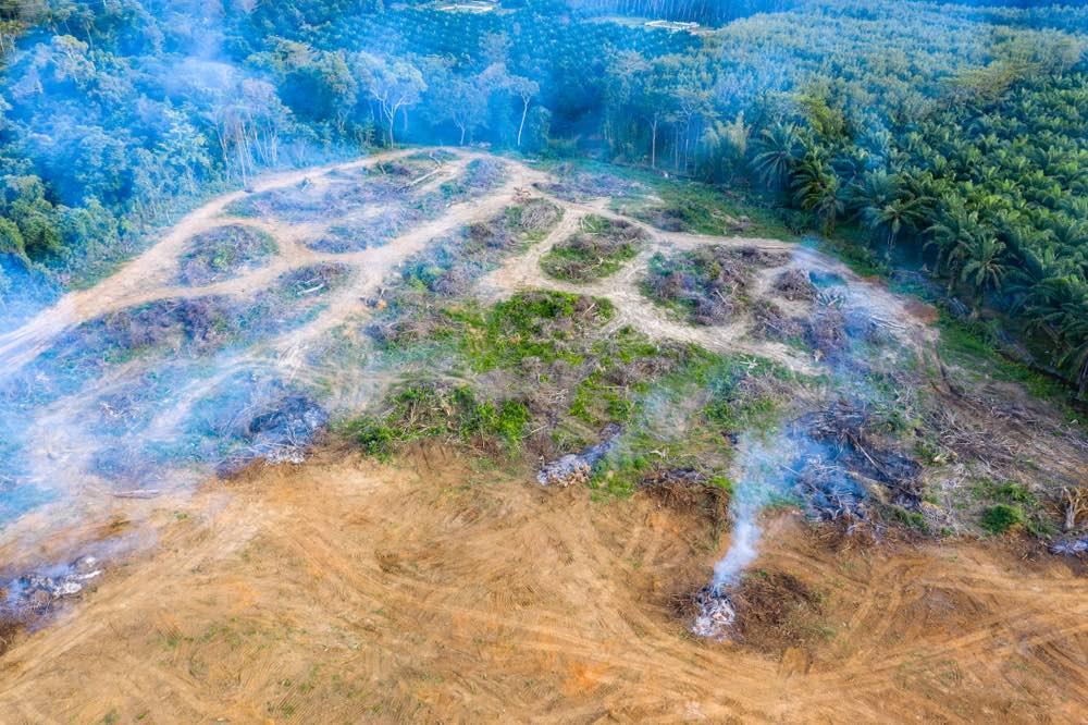 Amazonia-deforestacion