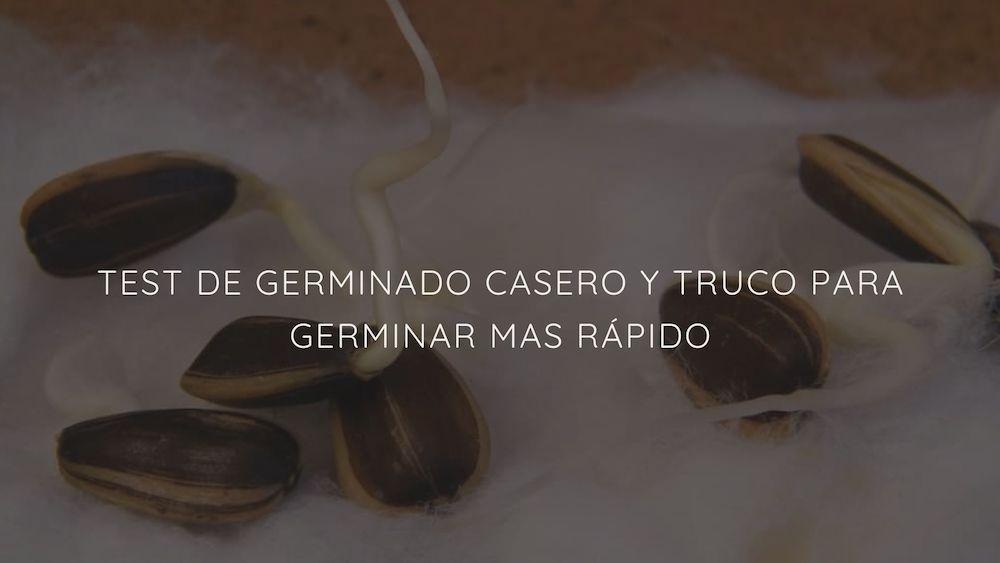 Truco-para-germinar-mas-r%c3%a1pido-