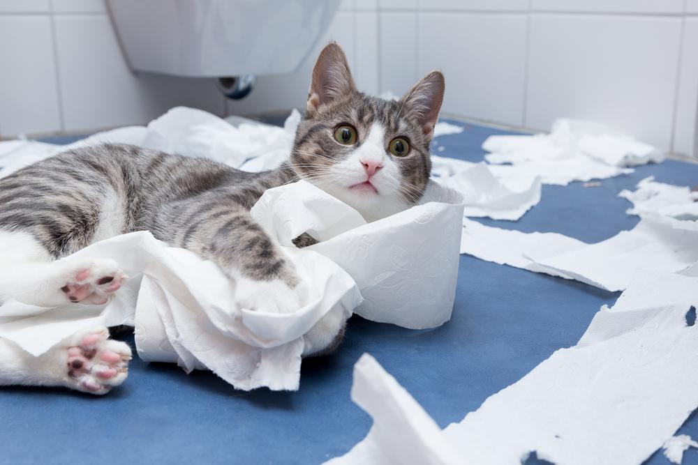 Juguetes-para-gatos-con-rollos-de-papel-higiénico
