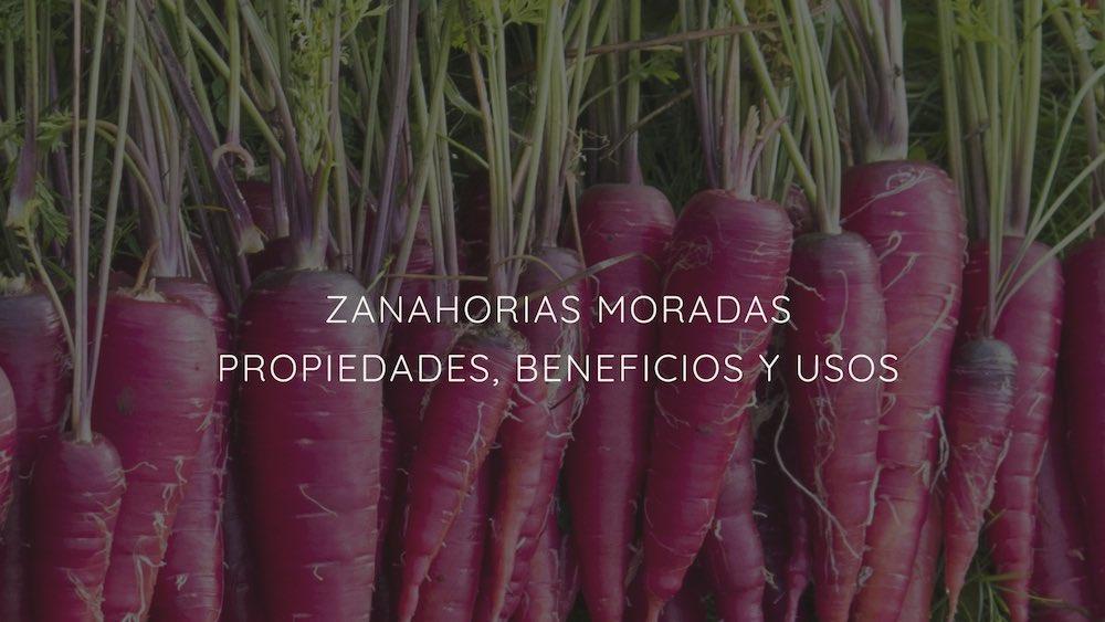 Zanahorias Moradas Propiedades Beneficios Y Usos La parte consumida de la zanahoria es su raíz, de la que existen múltiples formas y sabores. ecoinventos