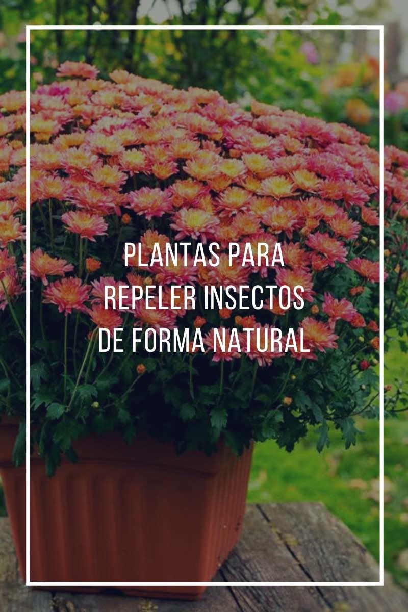 plantas para repeler insectos de forma natural