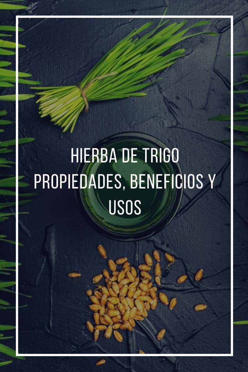 Hierba de trigo, propiedades, beneficios y usos