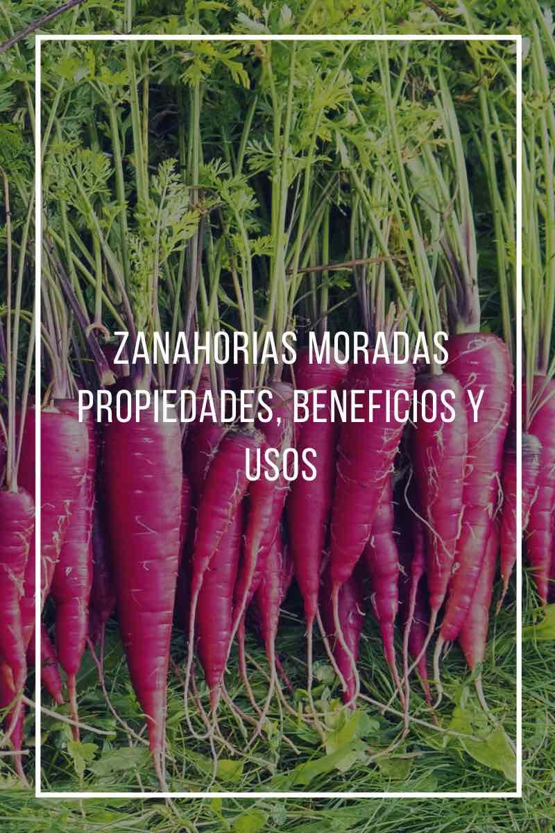 Zanahorias moradas, propiedades, beneficios y usos