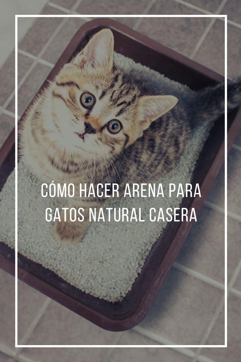 Cómo hacer arena para gatos natural casera