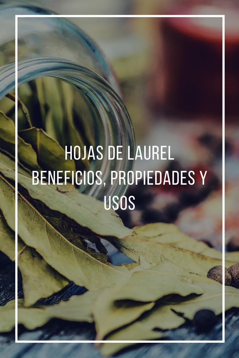 Propiedades, beneficios y usos de las hojas de laurel