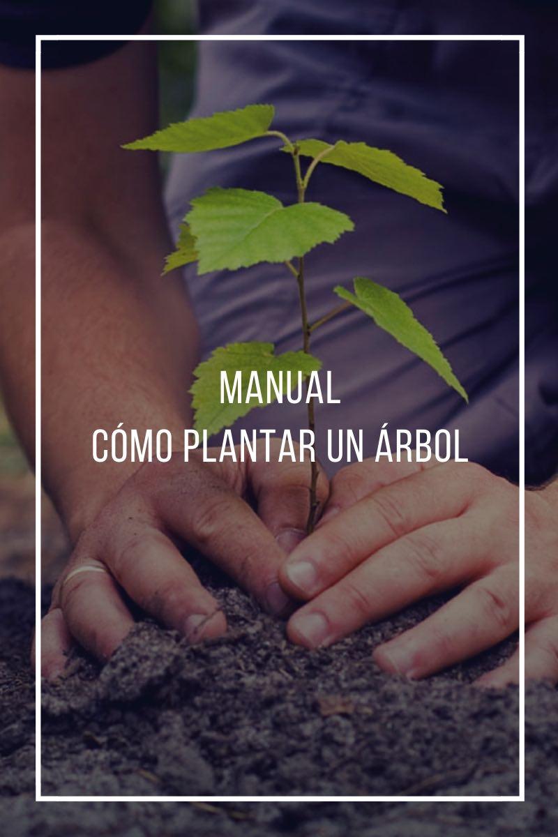 Manual Cómo plantar un árbol
