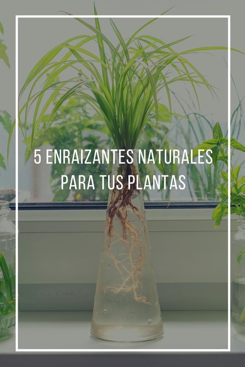 5 enraizantes naturales para tus plantas