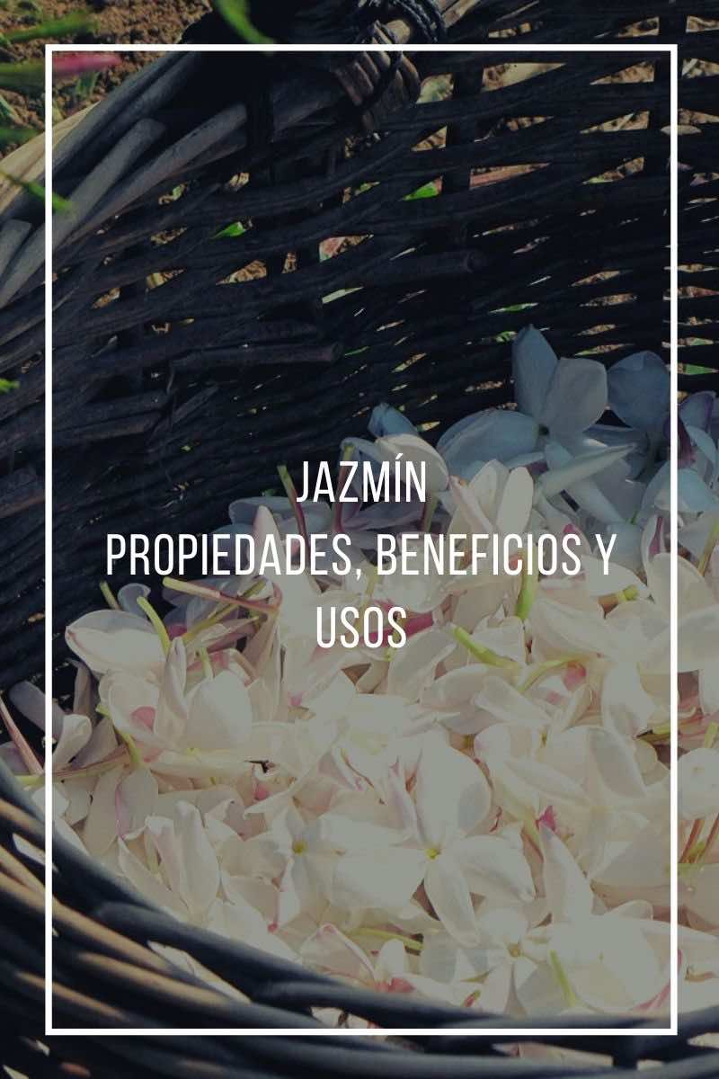 Beneficios, propiedades y usos del jazmín