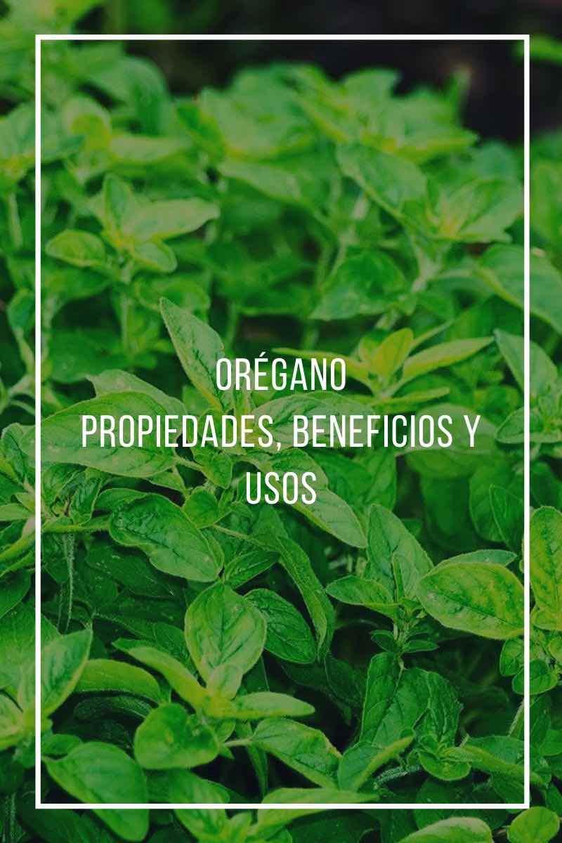 Orégano. Propiedades, beneficios y usos