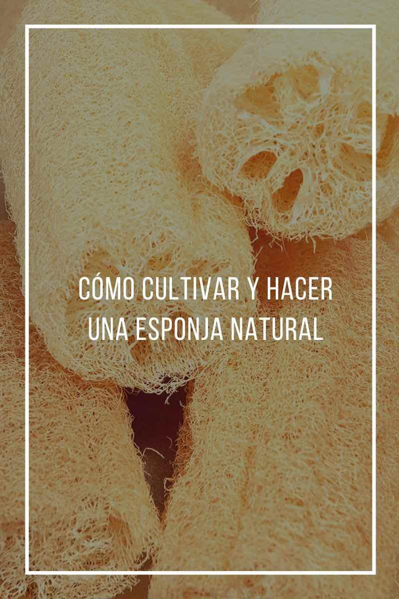 Cómo cultivar y hacer una esponja natural