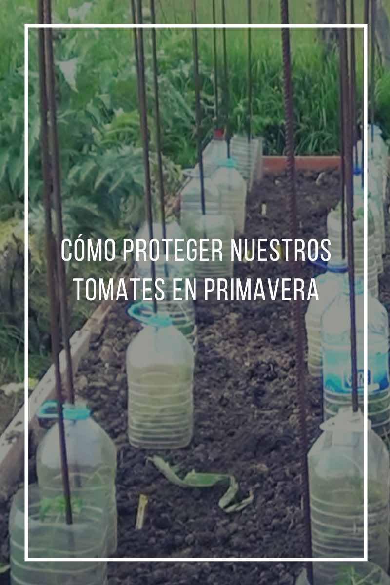 Cómo proteger nuestros tomates en primavera