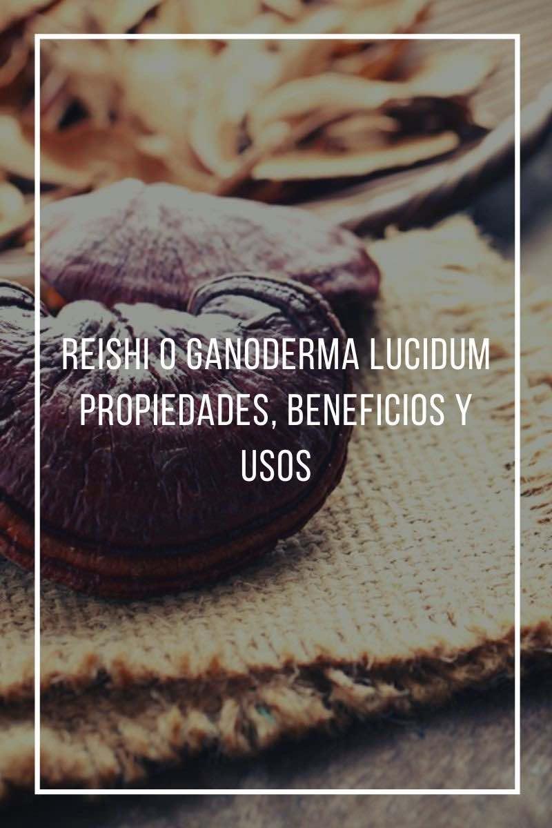 Reishi o Ganoderma lucidum: Propiedades, beneficios y usos