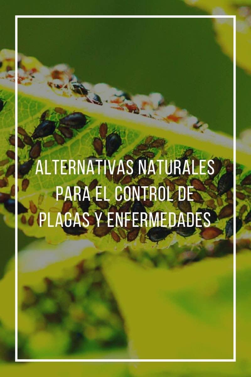 Alternativas naturales para el control de plagas y enfermedades