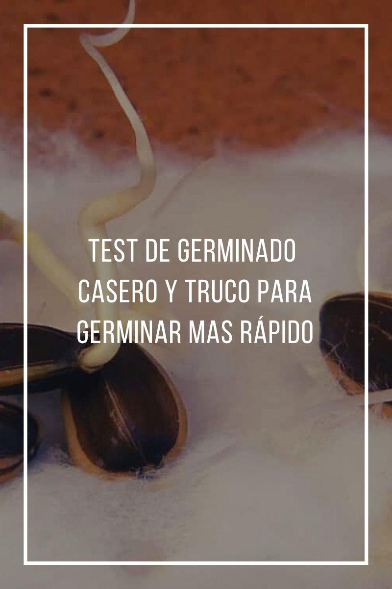 Test de germinado casero y truco para germinar mas rápido