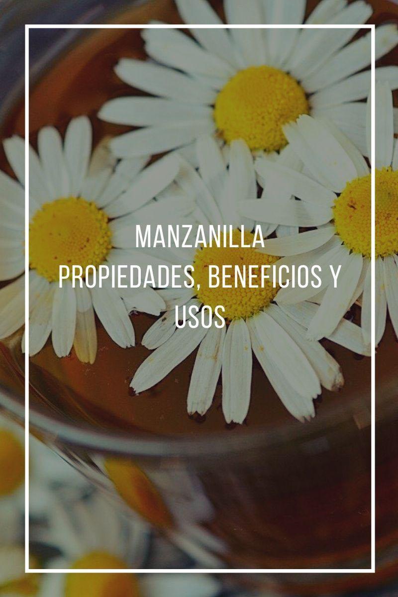 La Manzanilla Una Planta Con Propiedades Medicinales Sorprendentes