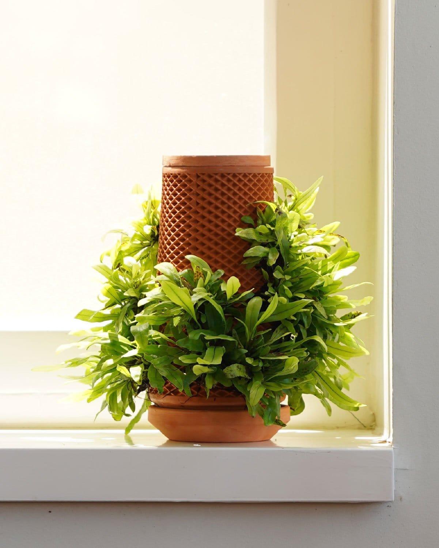 Terraplanter, la maceta que cultiva plantas a su alrededor sin tierra
