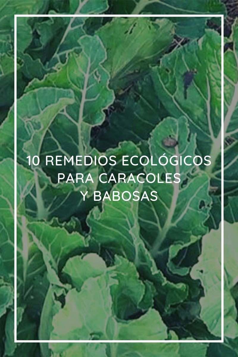 10 Remedios ecológicos para Caracoles y Babosas