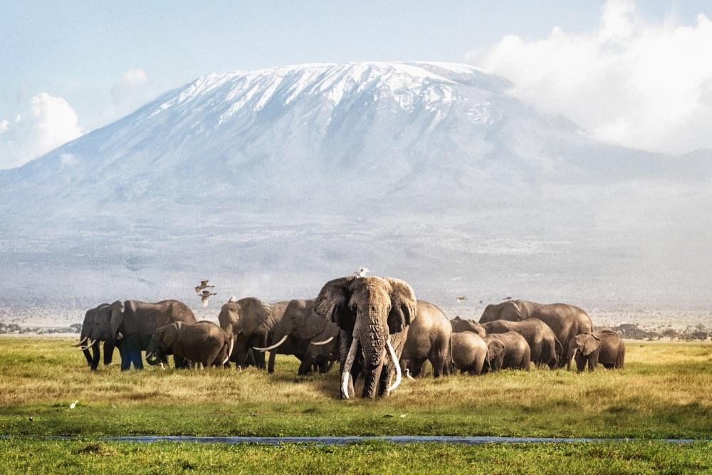 Elefantes-kenia