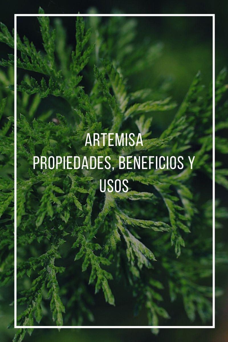 Propiedades, beneficios y usos de la artemisa