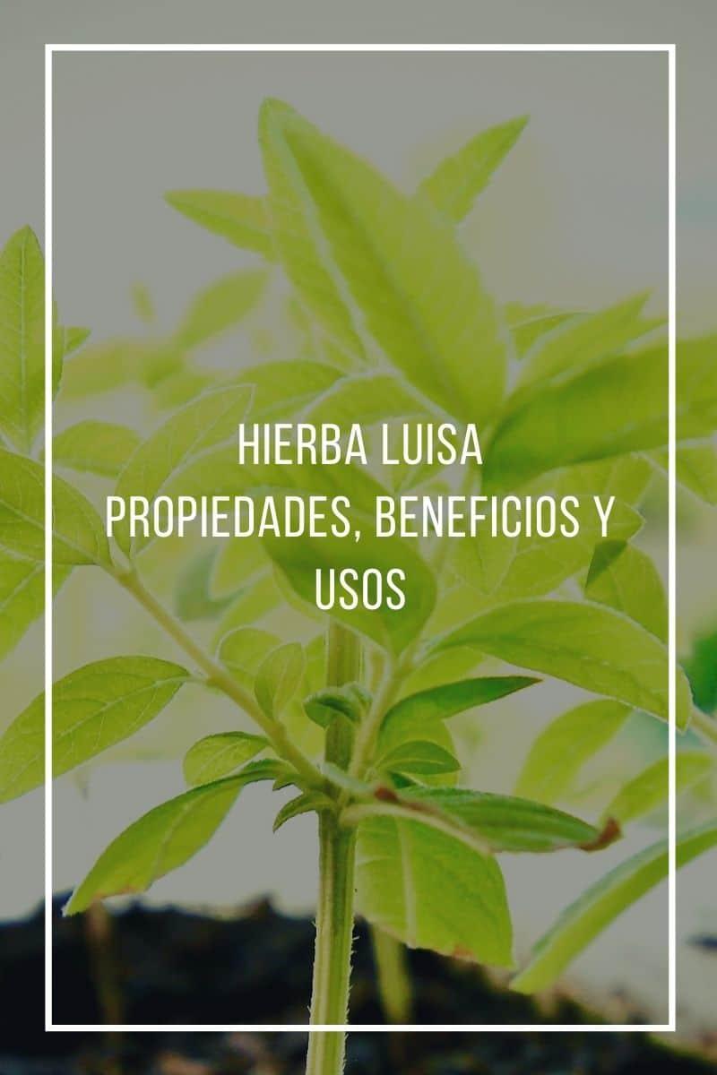 Propiedades, beneficios y usos de la Hierba luisa