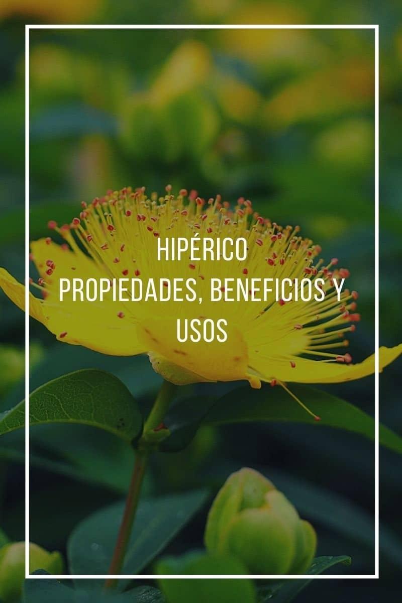 Propiedades, beneficios y usos del hipérico