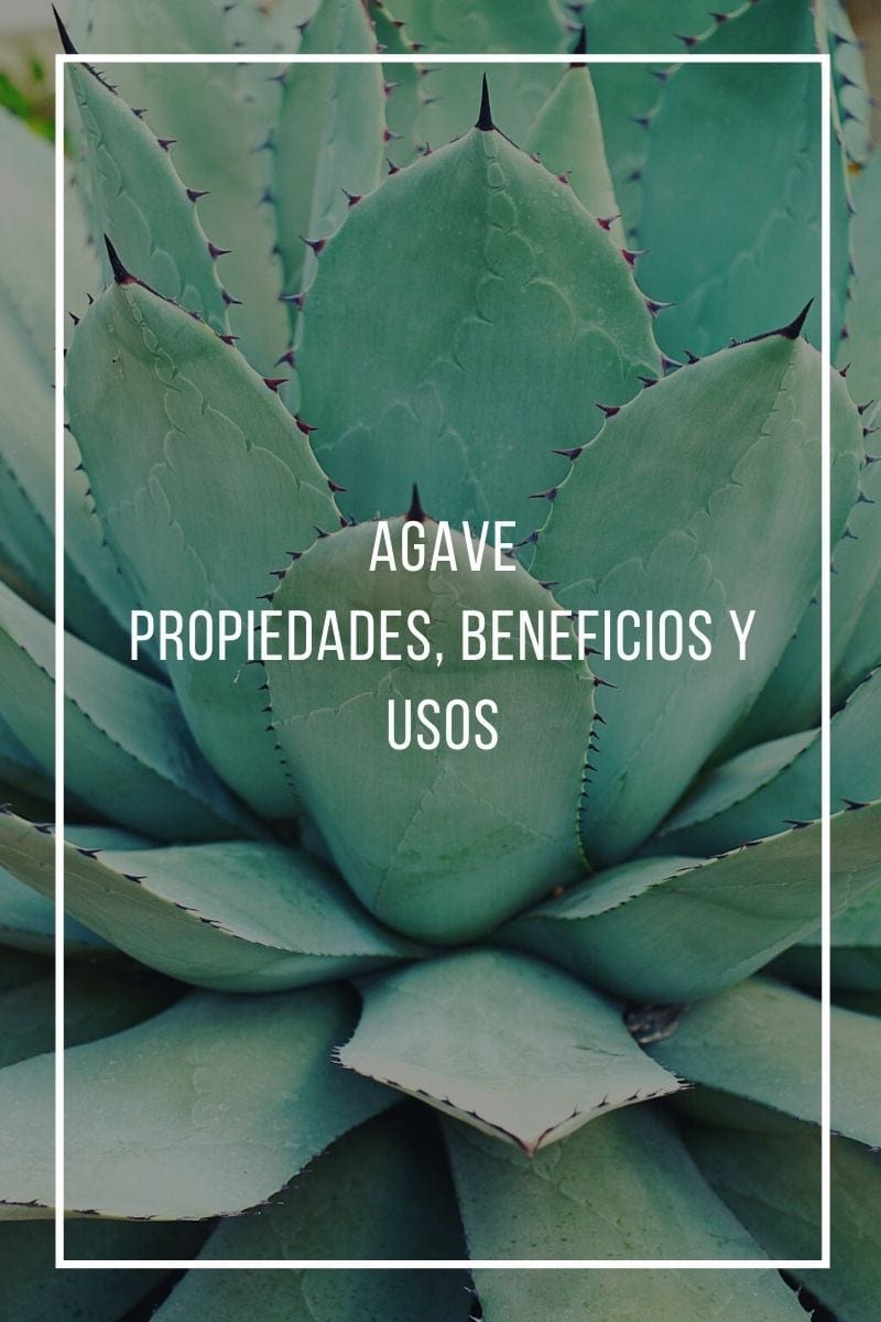 Propiedades, beneficios y usos del agave