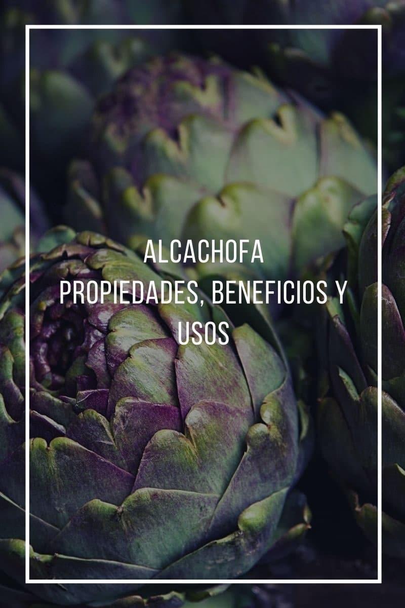Propiedades, beneficios y usos de la alcachofa