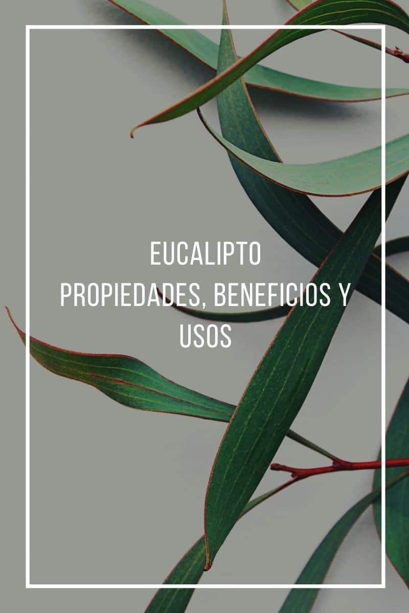 Propiedades, beneficios y usos del eucalipto