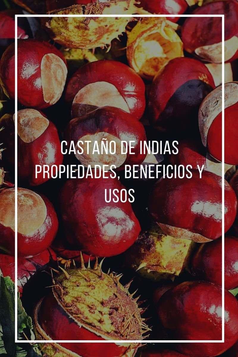 Propiedades, beneficios y usos del Castaño de Indias