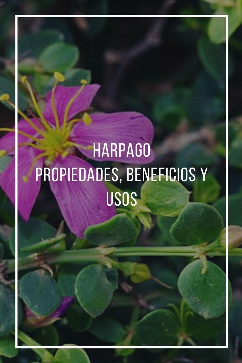 Propiedades beneficios y usos del Harpago