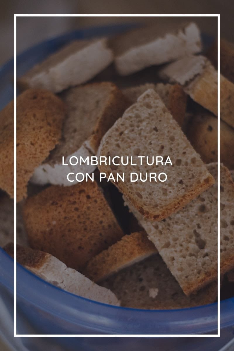 Lombricultura con pan duro