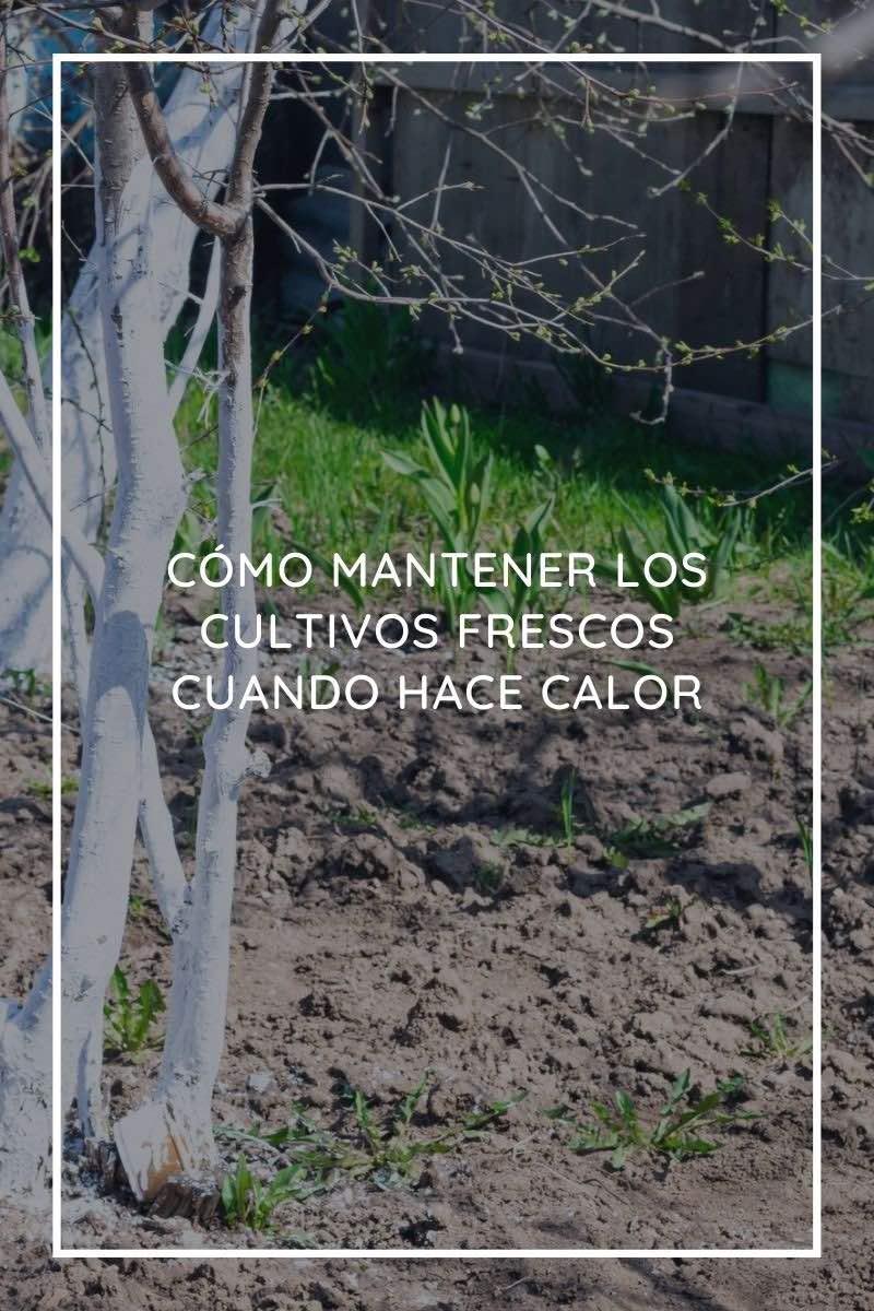 Cómo mantener los cultivos frescos cuando hace calor