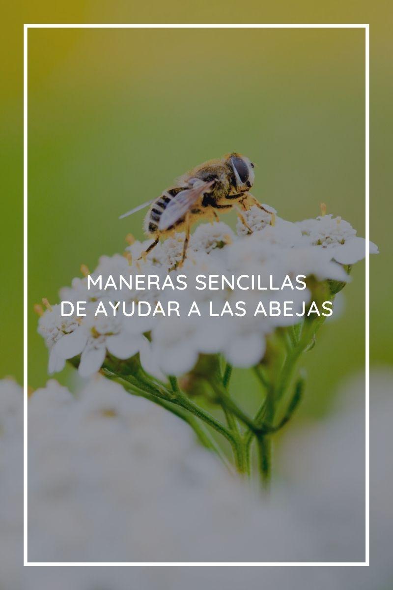 5 maneras sencillas de ayudar a las abejas