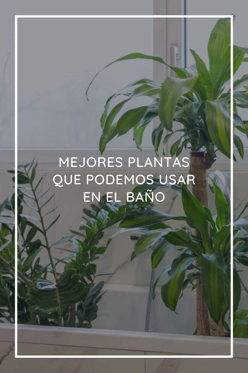 Las 13 mejores plantas que podemos usar en el baño