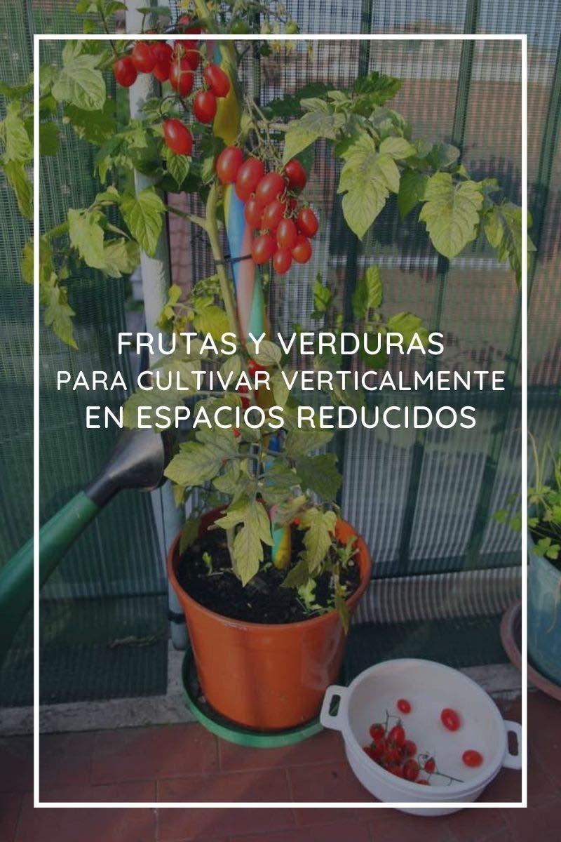 10 frutas y verduras para cultivar verticalmente con gran rendimiento en espacios reducidos