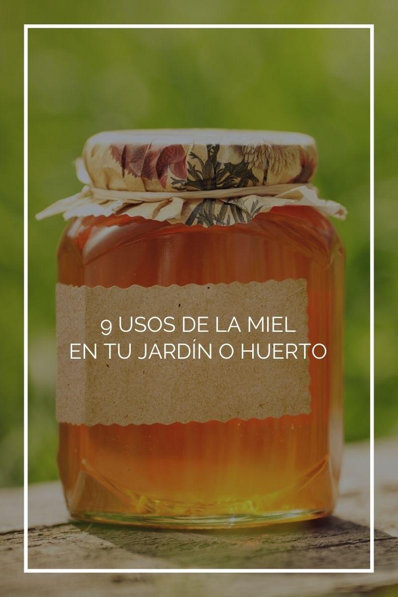 9 usos de la miel en tu jardín o huerto