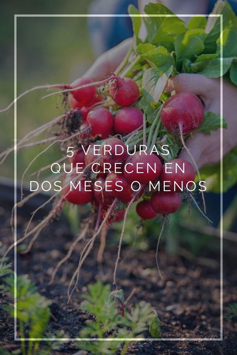 5 verduras que crecen en dos meses o menos